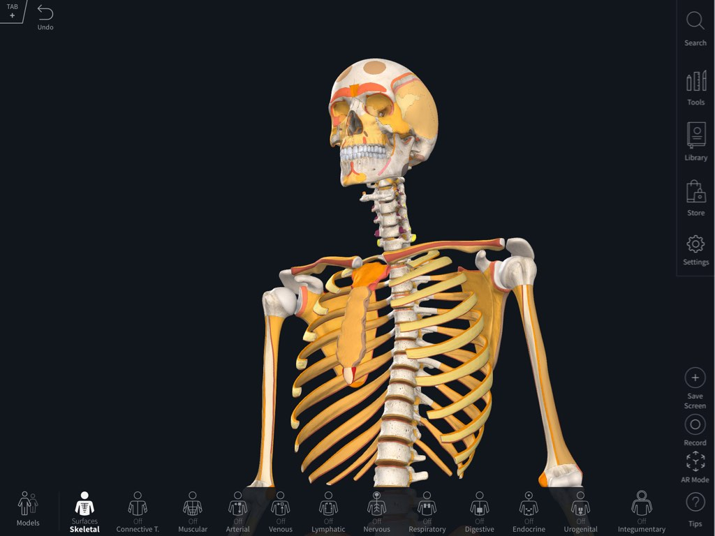 Bone Parts Surfaces Landmarks 3d4medical