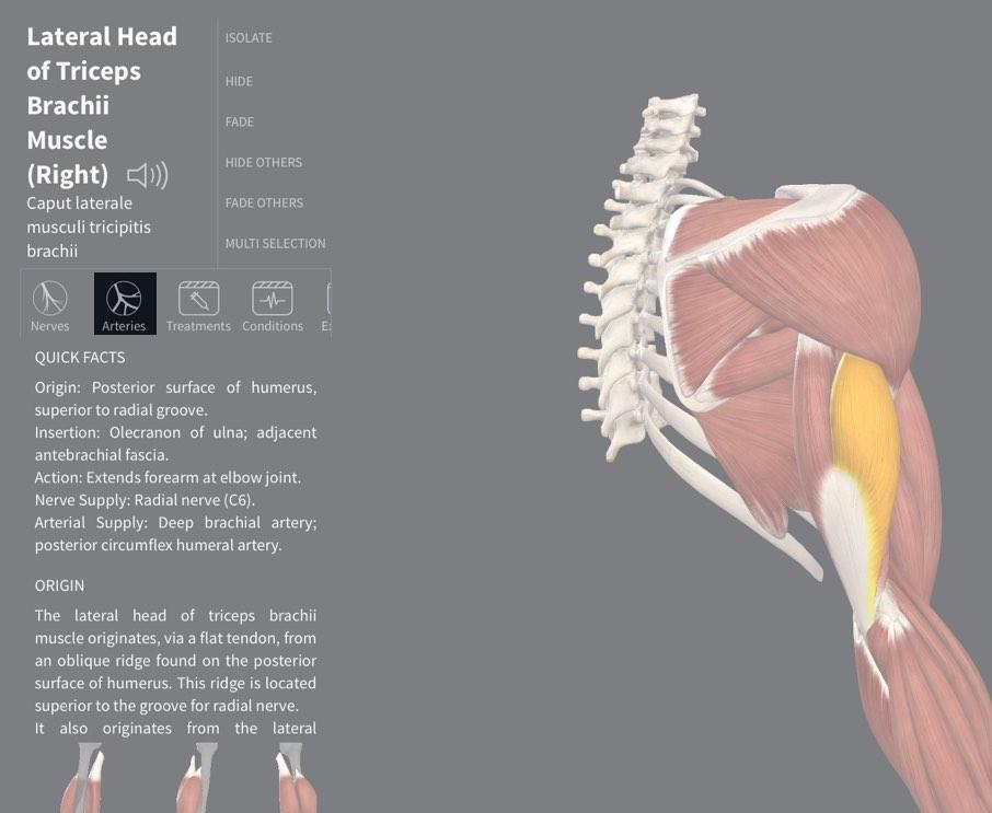 Arterial Supply 3d4medical