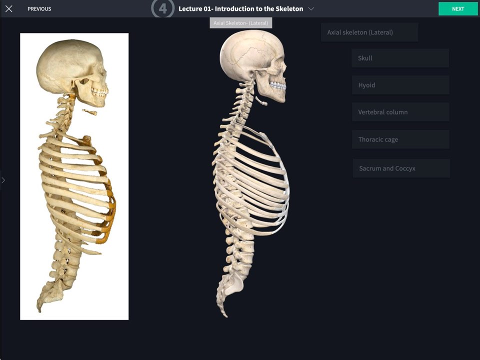 Courses Complete Anatomy