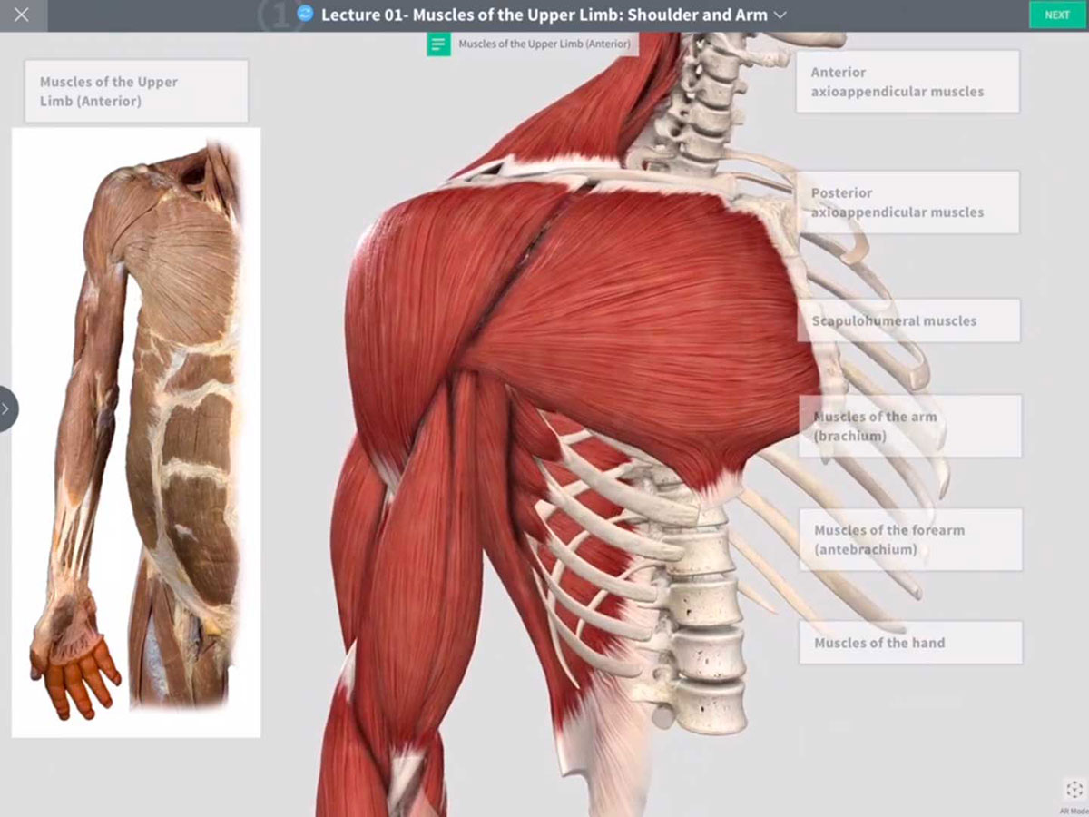 Cadaveric Lab: Skeletal and Muscular Systems – 3D4Medical