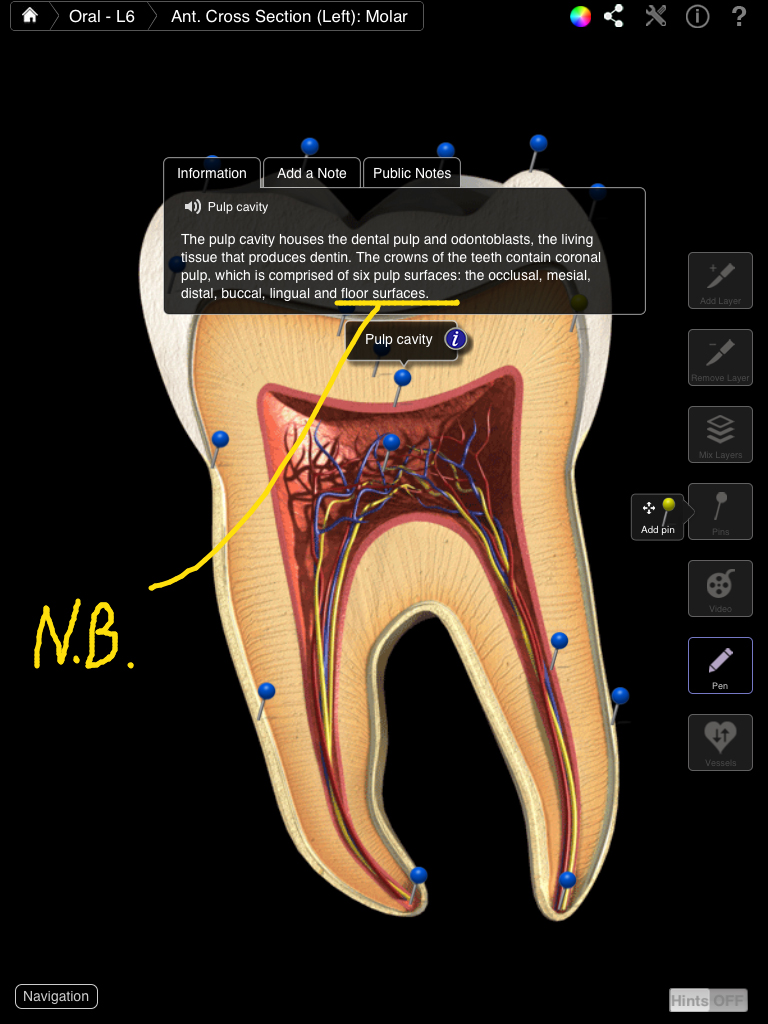 Dental Patient Education – 3D4Medical