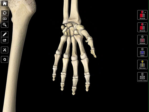 Essential Anatomy 3 3d4medical