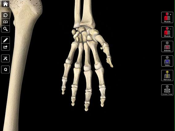 Essential Anatomy 3 – Complete Anatomy