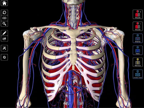 Essential Anatomy 3 – Complete Anatomy