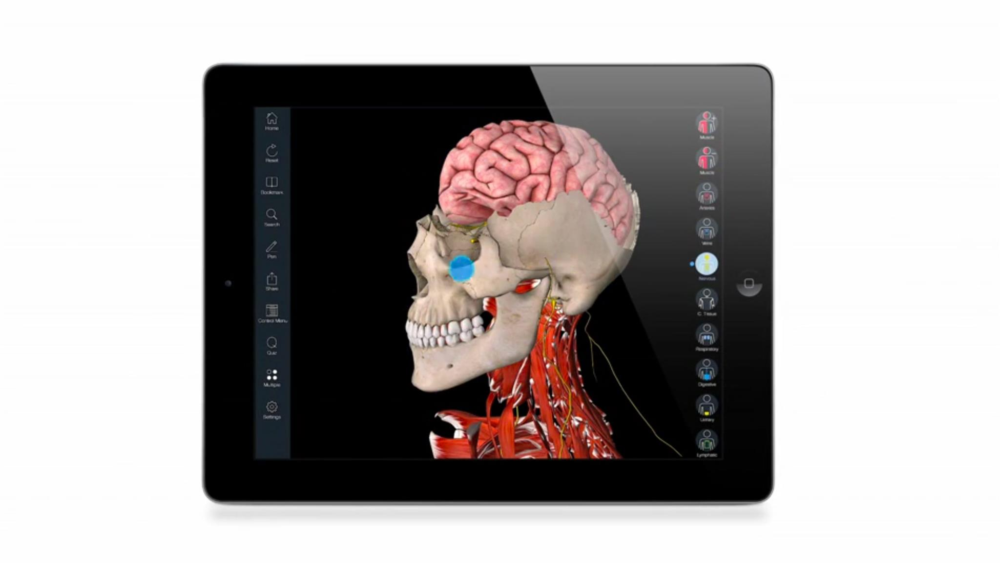 Essential Anatomy 3 – 3D4Medical