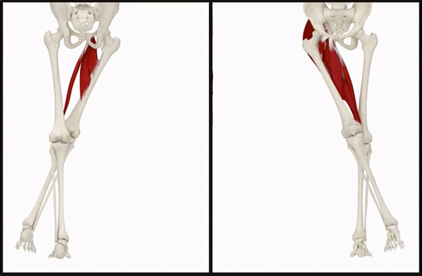 Essential Muscle And Skeleton Anatomy 3d4medical