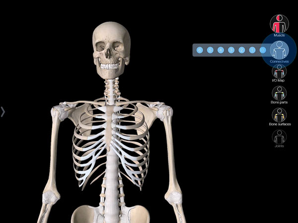 Essential Muscle and Skeleton Anatomy – 3D4Medical