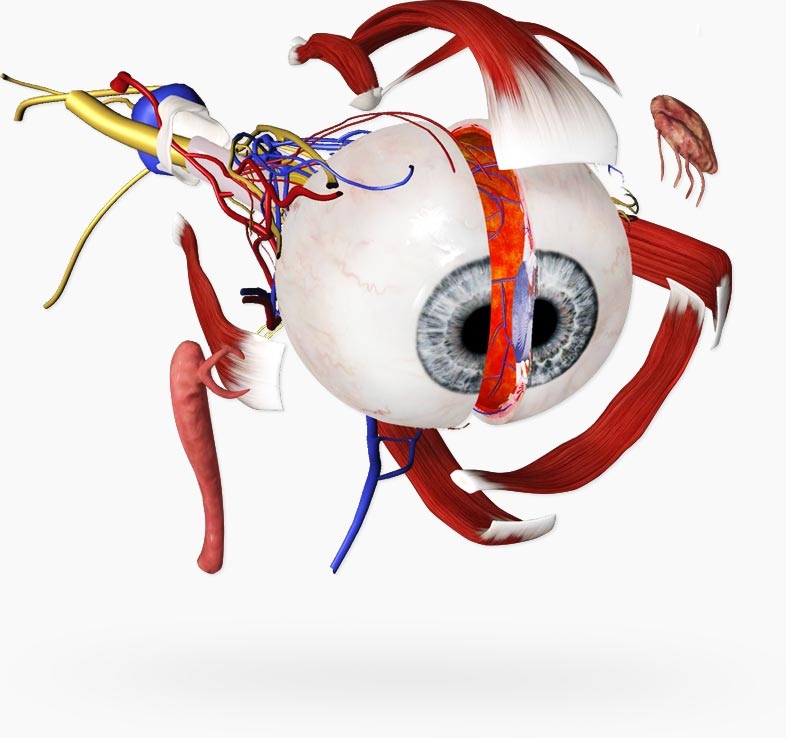 Eye – Practical Series – 3D4Medical