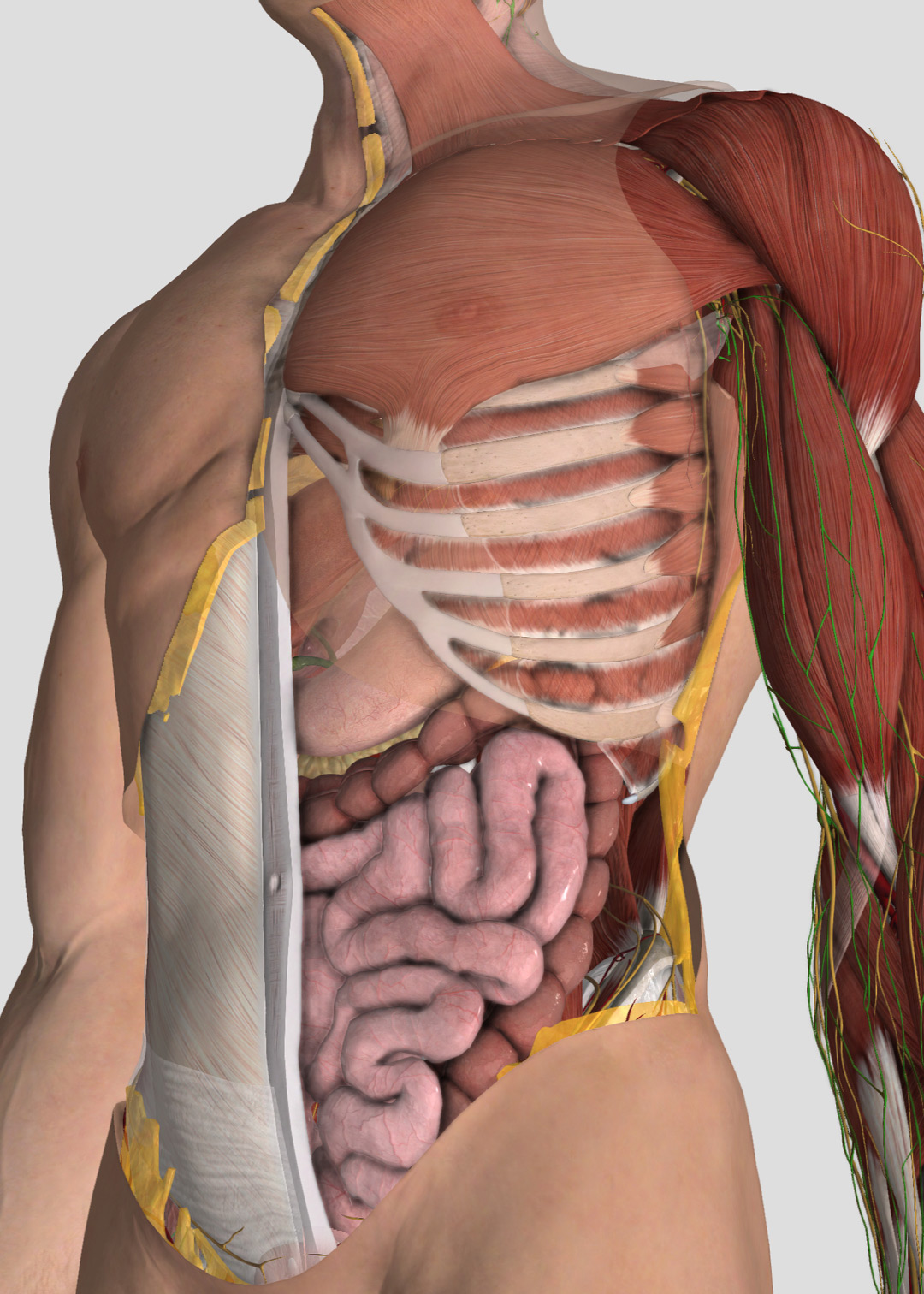 Complete Anatomy Free Trial 3d4medical