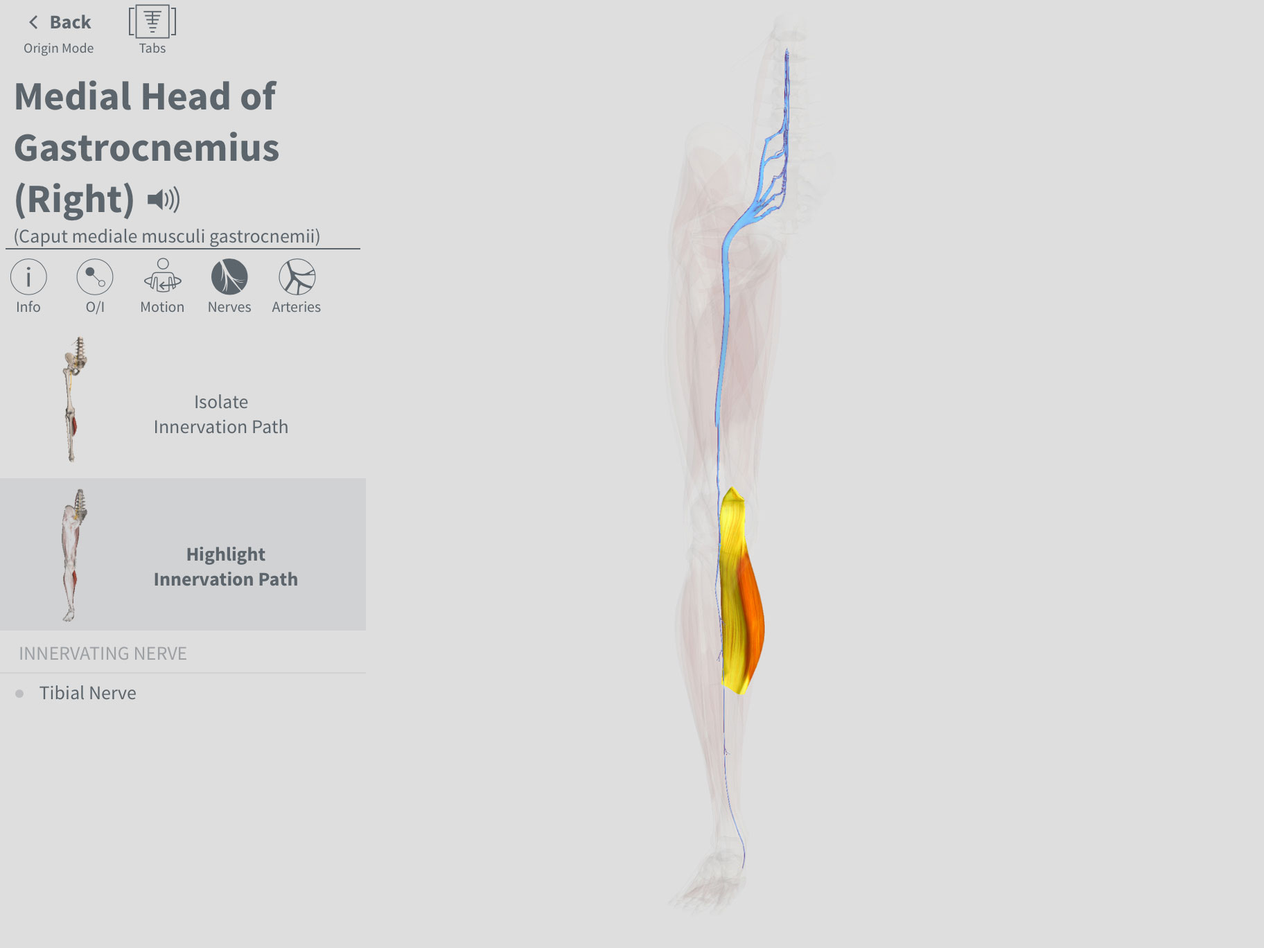 Complete Anatomy Free Trial 3d4medical Statics Course Body Diagrams Click Here To See The Full Explore Over 6500 Structures Across 12 Systems In Breathtaking 3d Say Goodbye Static Textbook And Discover A Whole New