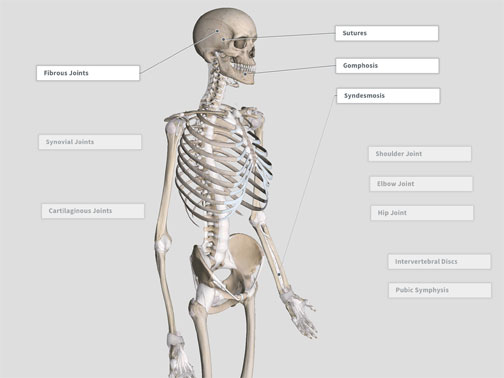 Exercise – 3D4Medical