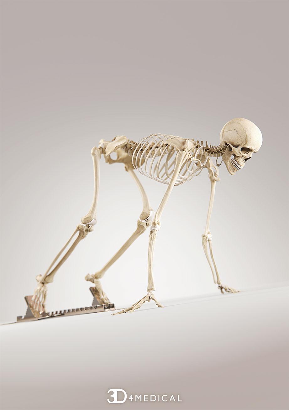Skeleton System