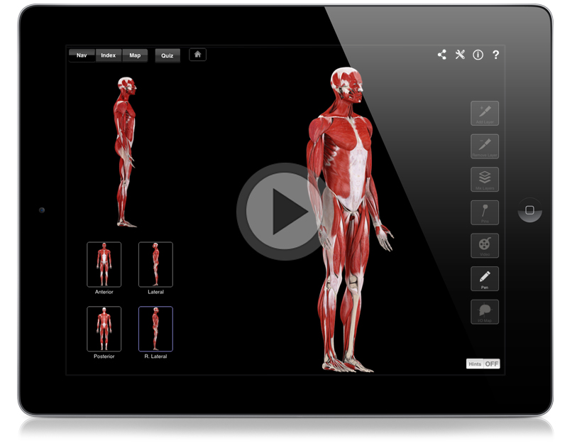 Muscle System Pro 3d4medical