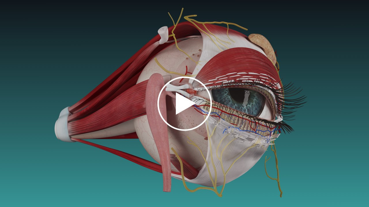 watch Complete Anatomy video