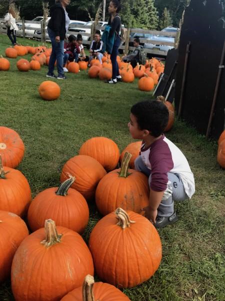 Our Annual Pumpkin Picking