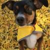 Bodhi--my sweet pup