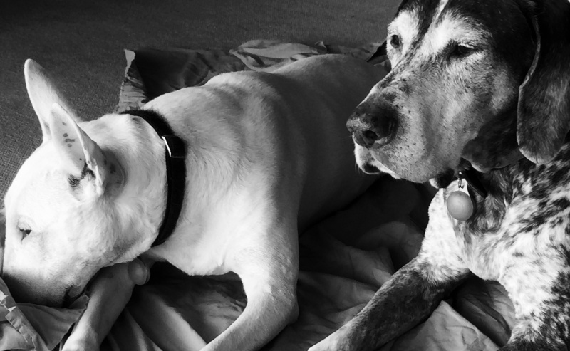 Whiskey and Winston