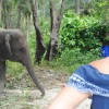 Kat Meets Elephant, Likes It