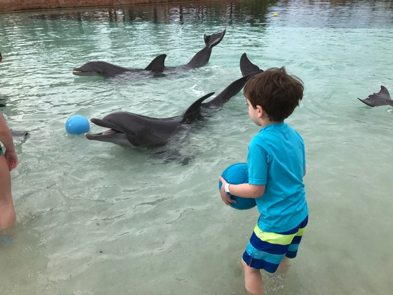 Playing catch with the dolphins!