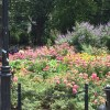 The flowers at Washington Square Park - My favorite!