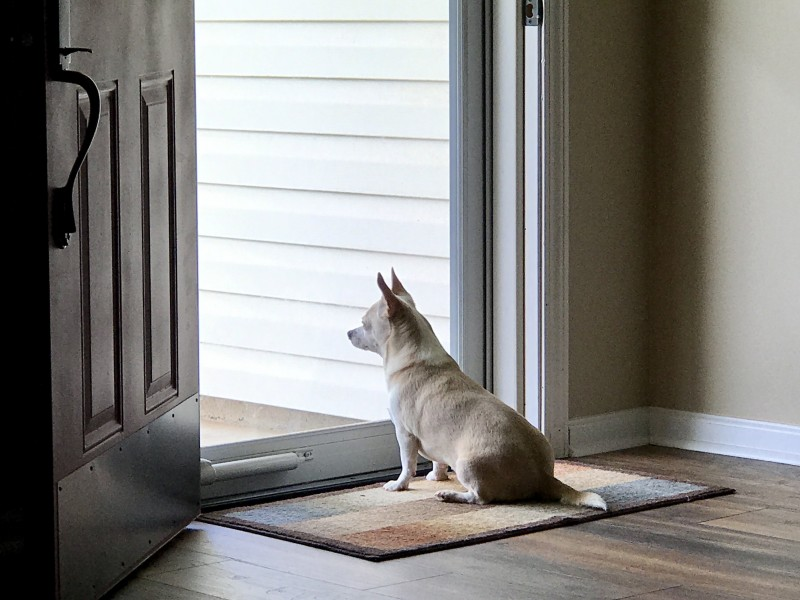 Lilly waiting for granny to come home