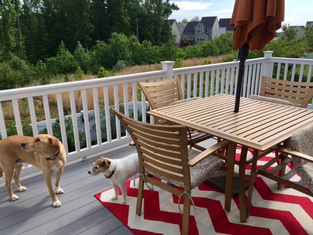 During the summer, we eat dinner on the deck and look out over the field.