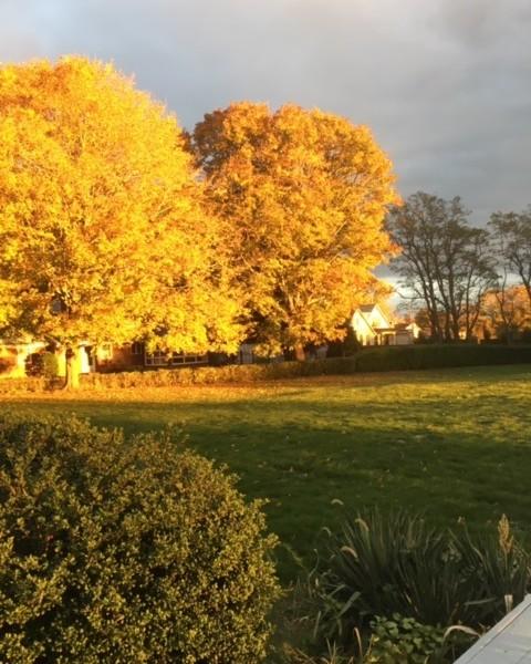 Backyard fall