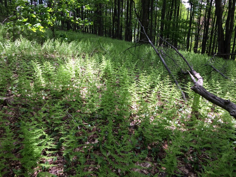 fern forests are on of erica's favorite things!!