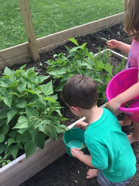 This is what I have been waiting for! The kids picking and eating green beans from the garden!