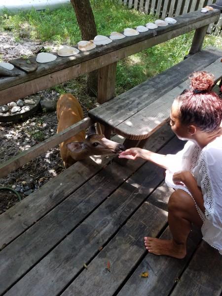 Denise's daughter feeding the visiting deer