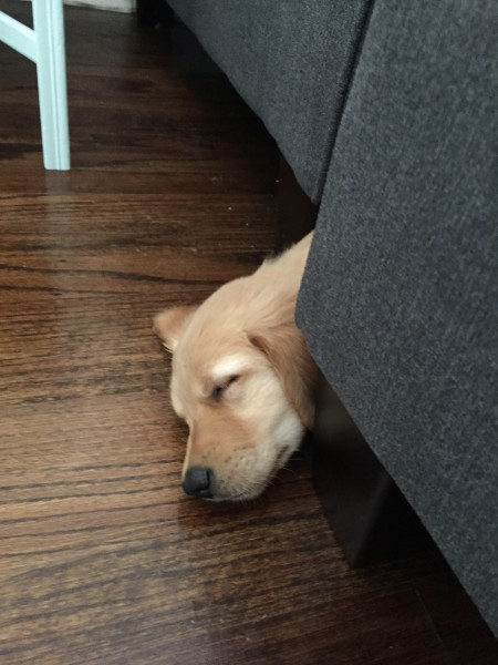 Napping under the couch!