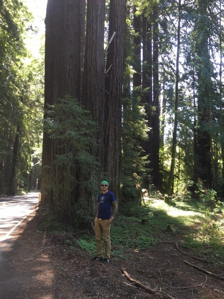Hiking through the redwoods