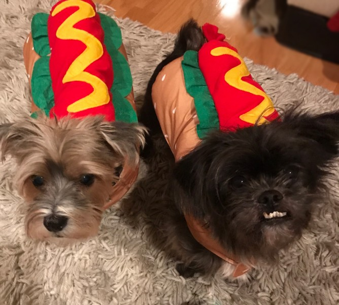 My two adorable hot dogs!