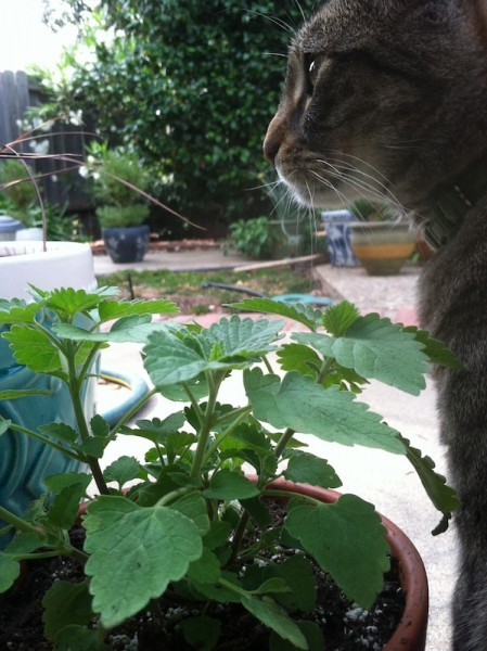 Fiona enjoying some catnip