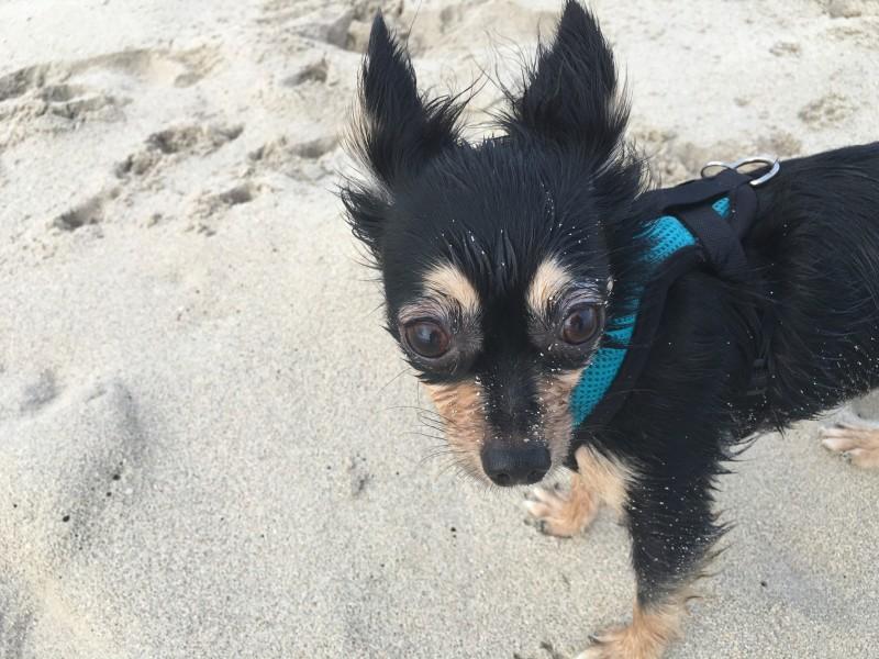 Meli on the beach