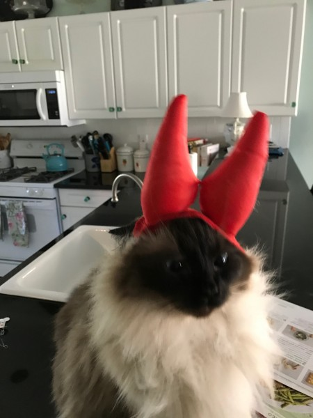 Our bad cat with her horns