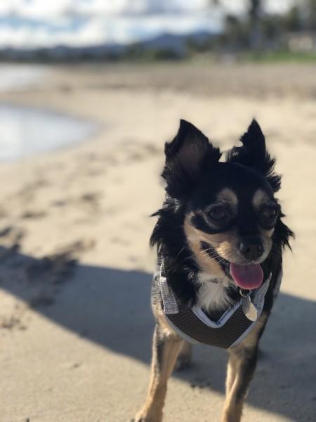 Meli loves the beach