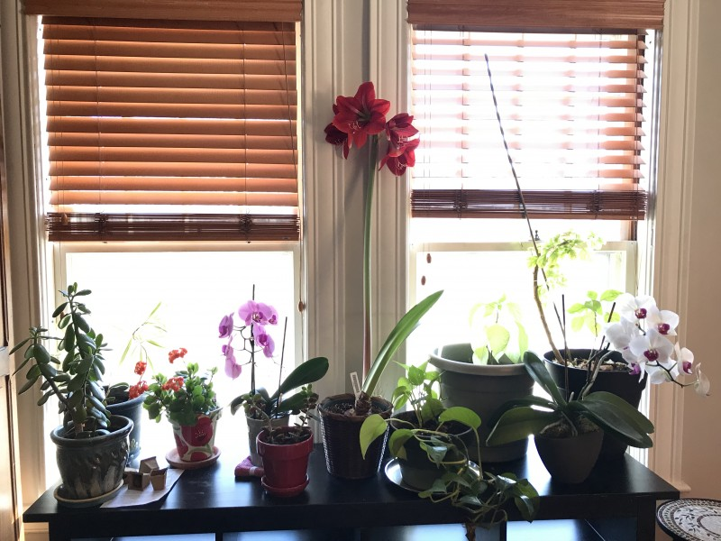 lots of plants and flowers at home!