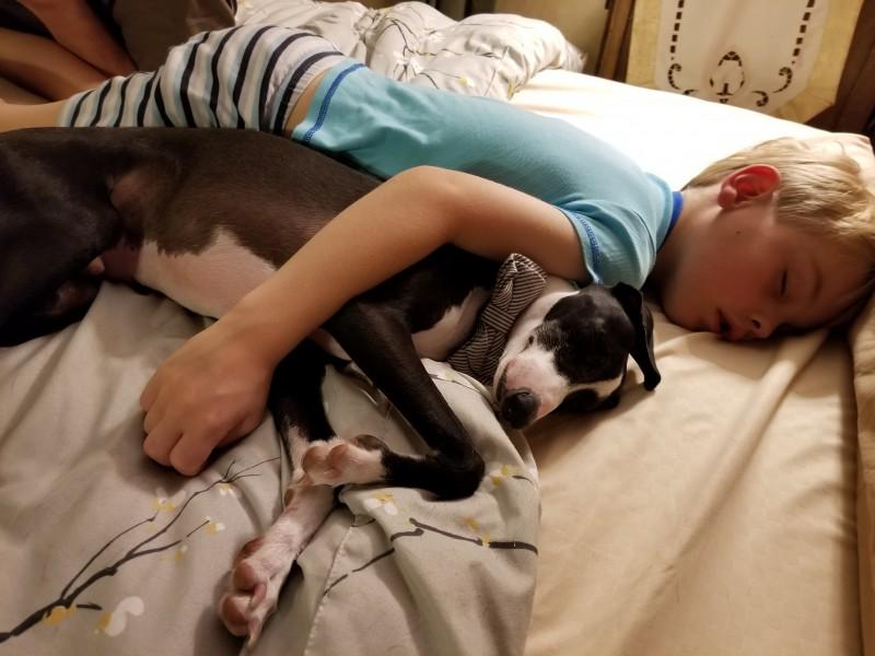 Tristan loves Hermes snuggles