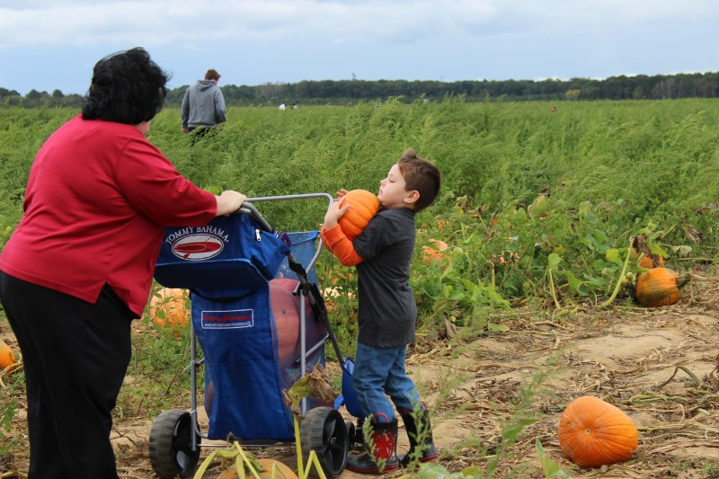 Pumpkin picking!!!