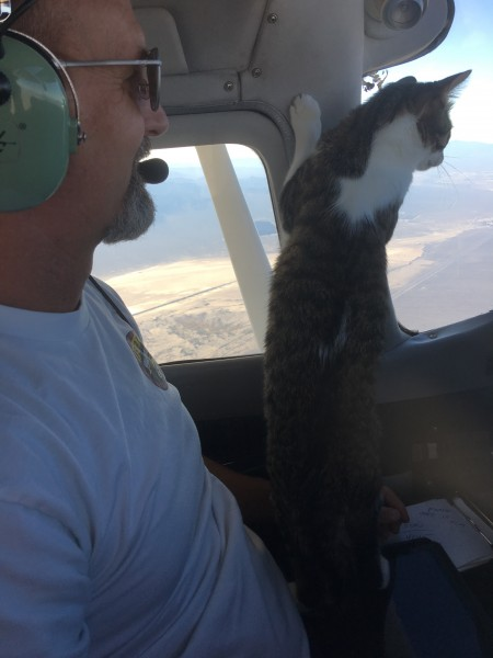 Redford the Flying Cat