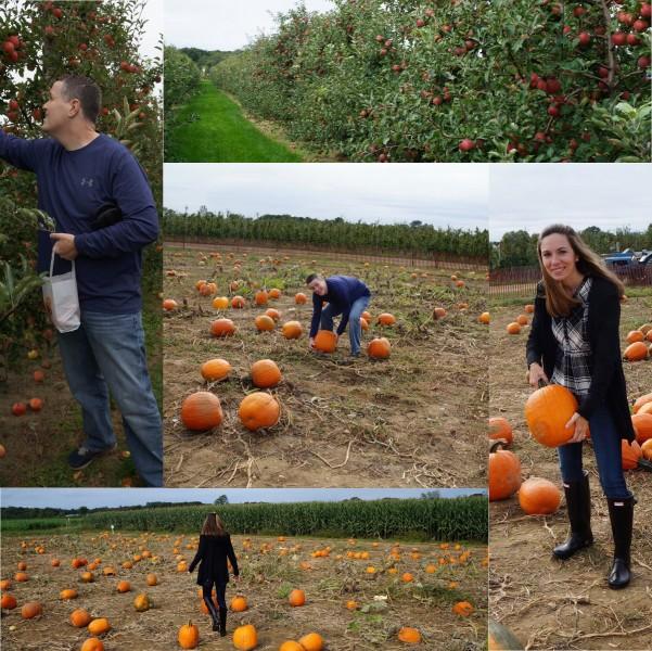 Fun apple and pumpkin picking