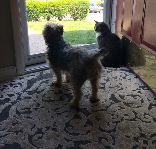 Markie & Charlee love looking out the front door to see everyone pass by.
