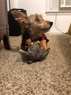 Markie with his hedgehog :)