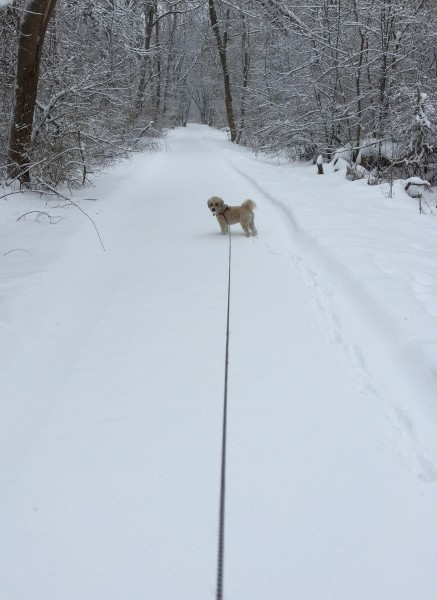 Snowy bike trail walk 2019: take 2