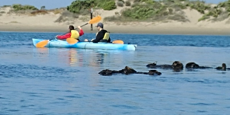 Kayaking, sea otters in the water