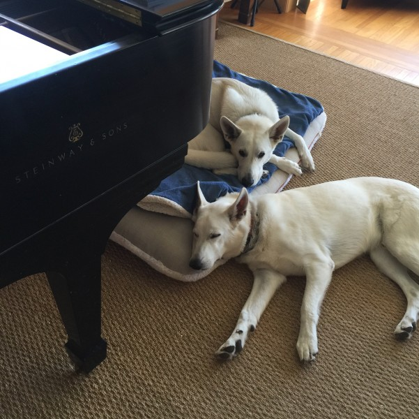 Our German Shepherds under our piano