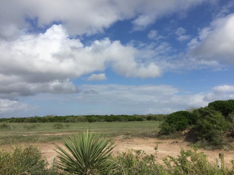 Laguna Atascosa Wildlife Refuge, South Texas