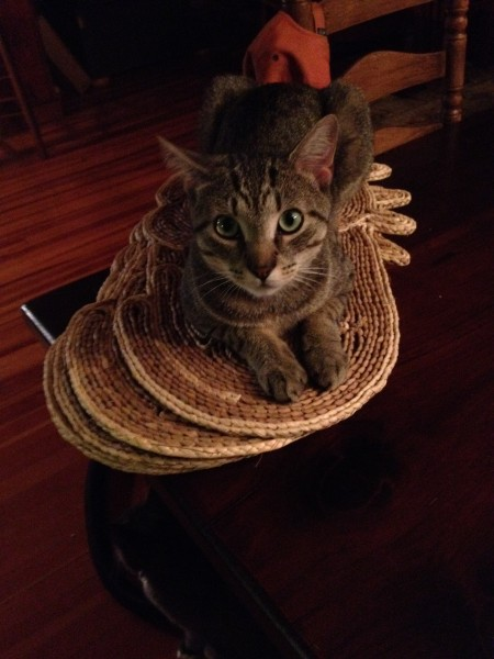 Guy cat