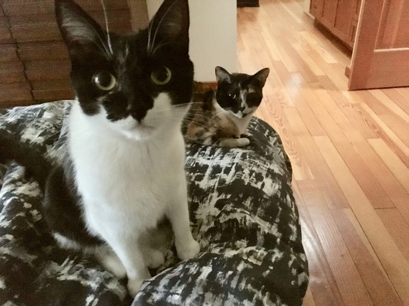 Here are our two cats. Noodles is b&w. Pua is calico.